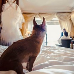 So what is reportage photography or wedding photojournalism?