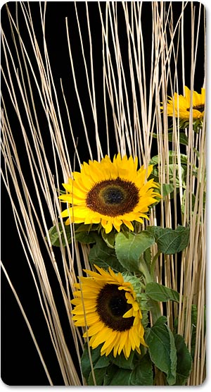 italian-wedding-sunflowers