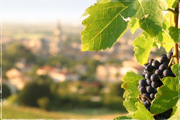 weddings-in-monferrato-hills