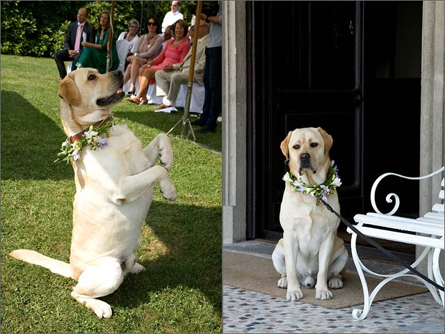 ideas-for-dog-weddings