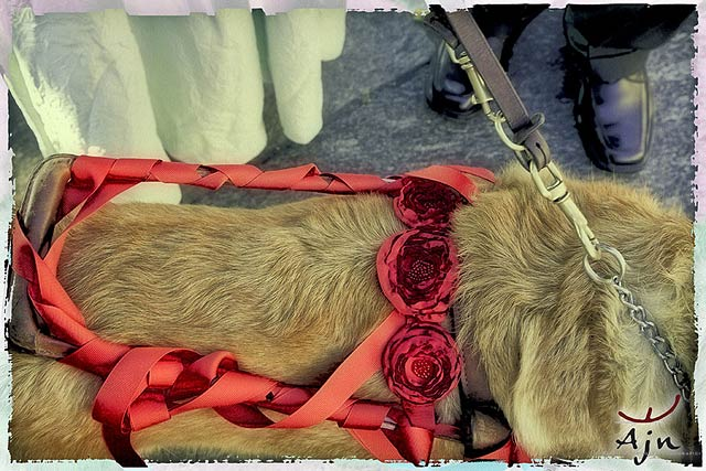 dog-decorations-for-wedding