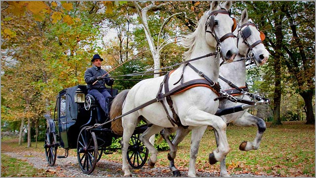 wedding horse-carriage lake Maggiore Italy