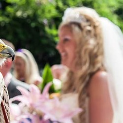 Rings? What if the the hawk is bringing them? An unforgettable wedding at Villa Bossi