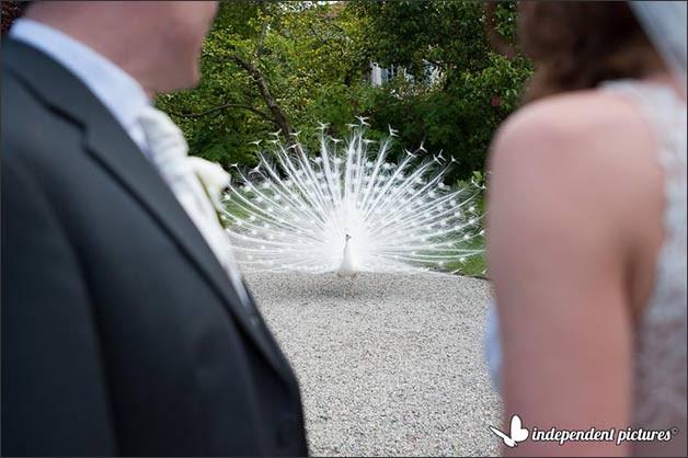 isola-madre-weddings